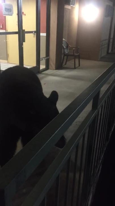 Black bear surprises guests at Gatlinburg hotel.