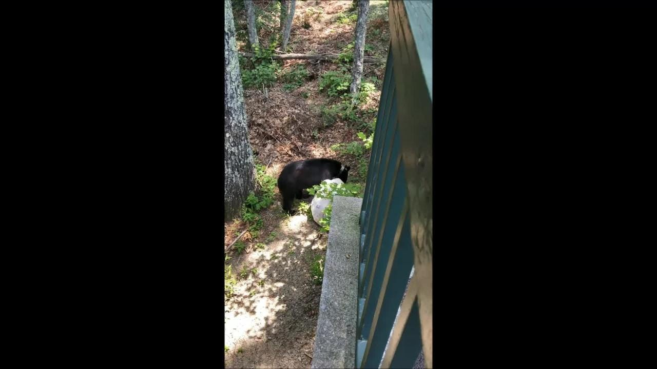 Bear makes off with trash