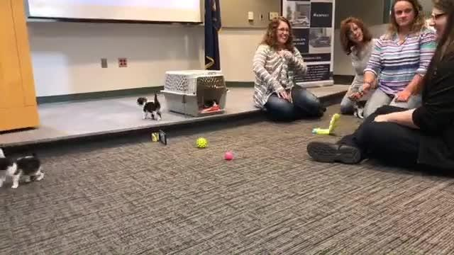 The Troy Police Department interviewed felines for its police cat position.