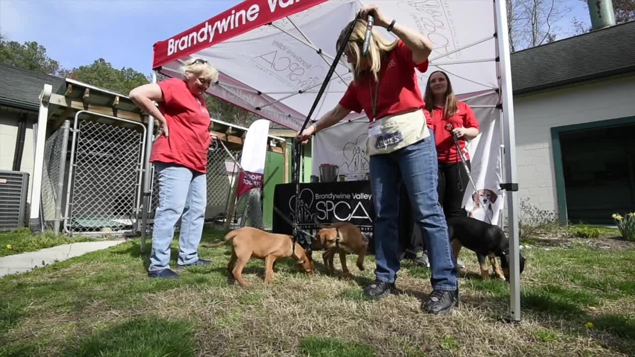 Brandywine Valley SPCA Georgetown Shelter and Animal Health Center will be removing their crematorium and replacing it with a education center.