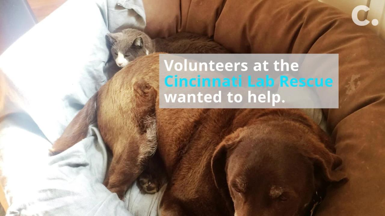 When the Cincinnati Lab Rescue took in Tess and Dory, these volunteers knew they couldn't separate them.