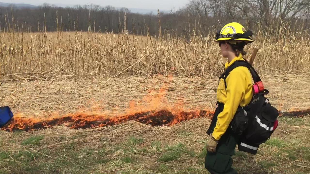 NJ Forest Fire Service sets controlled burns in early spring to reduce leaves, logs and other debris and prevent wildfires.