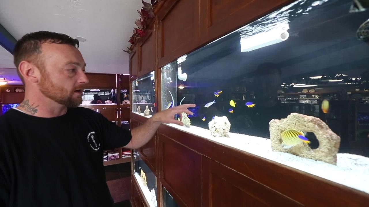 Love of marine life leads to helping show 'Tanked'