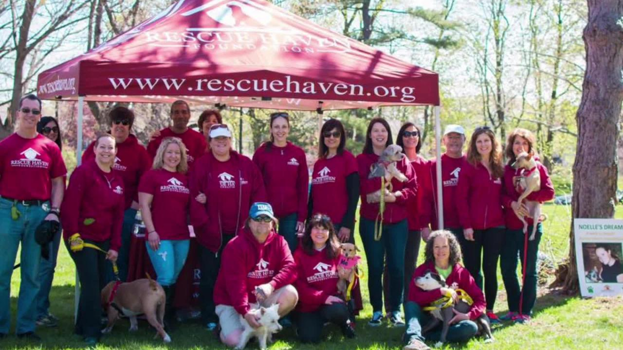 Noelle's Dream dog walk, in memory of veterinarian technician Noelle Rossetto, benefits the Rescue Haven Foundation.