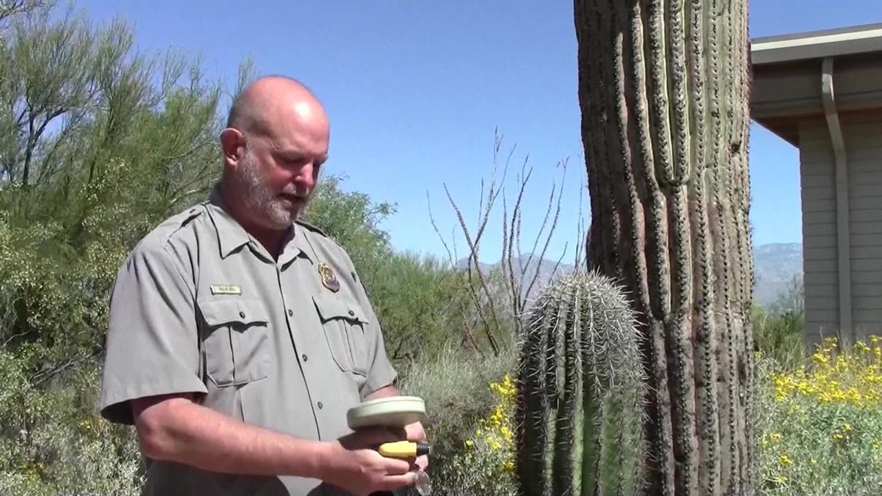 Insertan microchips en los cactus de Arizona para prevenir su robo