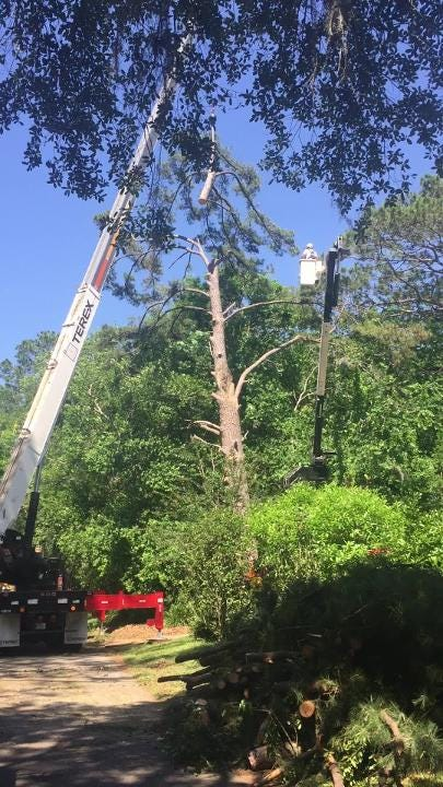 A pine tree damaged by a storm in January 2017 at the home of News Director Jennifer Portman was removed Tuesday after being deemed unsafe by the city of Tallahassee.