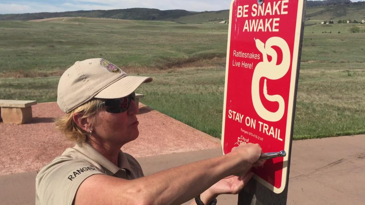 Rattlesnakes have begun to be seen on local foothills trails. Here is how to stay safe.