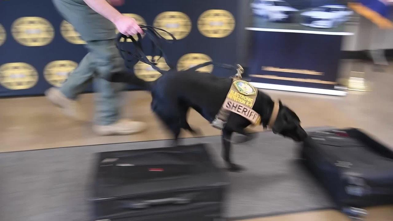 Williamson Co. Sheriff's office introduces Remi their new dog capable of searching for electronic devices.