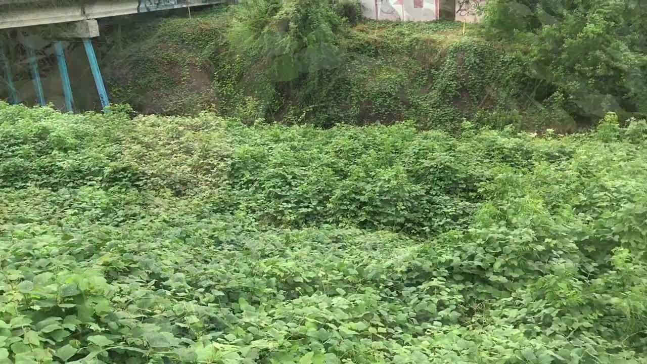 Invasive plants can take over natural landscapes