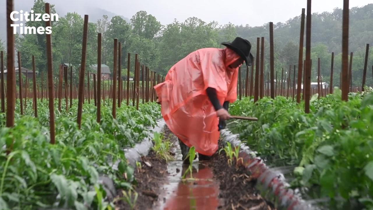 Farmers in WNC are suffering a loss of crops due to prolonged heavy rains and flooding.