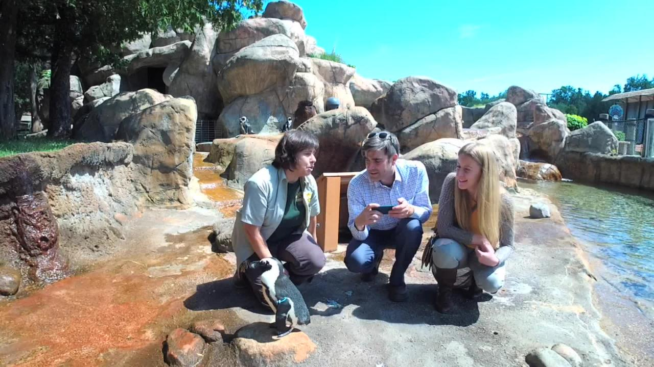 The Daily Dose team visits NEW Zoo & Adventure Park to pet some penguins and talk with animal curator Carmen Murach about summer hours and events.