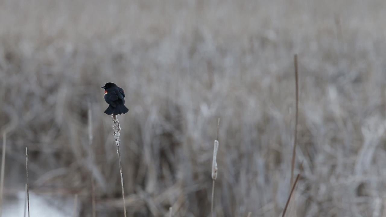 UW-Manitowoc professor emeritus Chuck Sontag has been birding the Manitowoc lakeshore for decades.