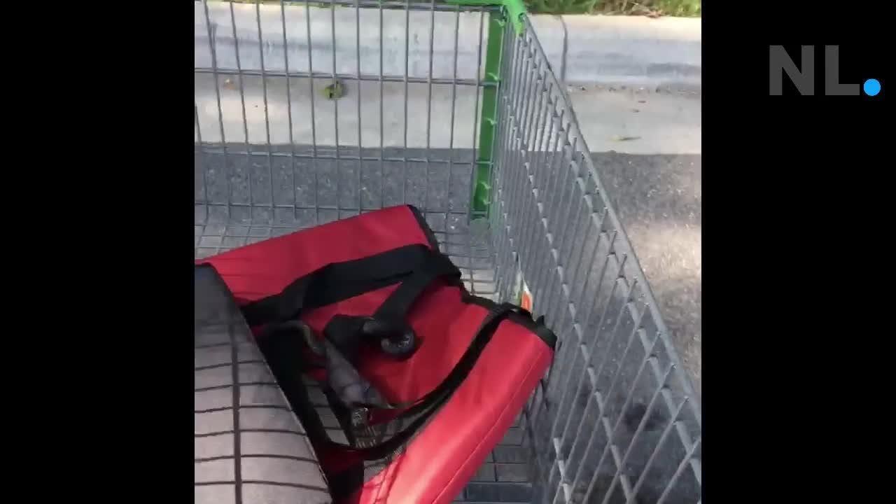 Walmart shopper John Cazort finds a 4-foot snake among his bags of groceries