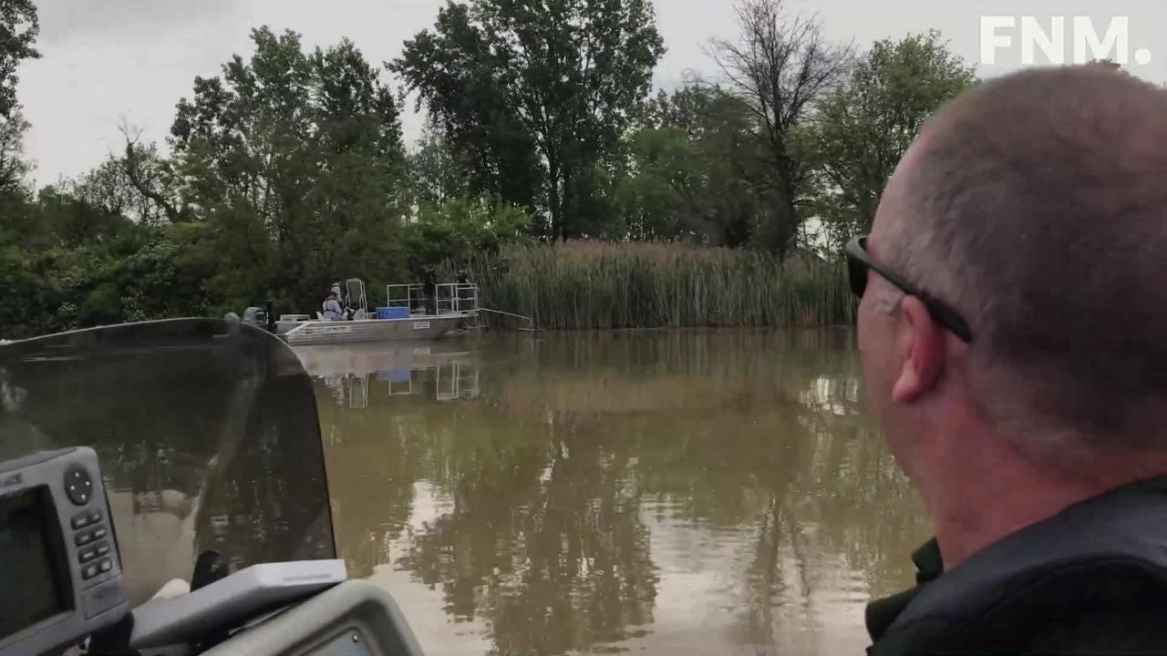 Wildlife teams search for grass carp in Sandusky County