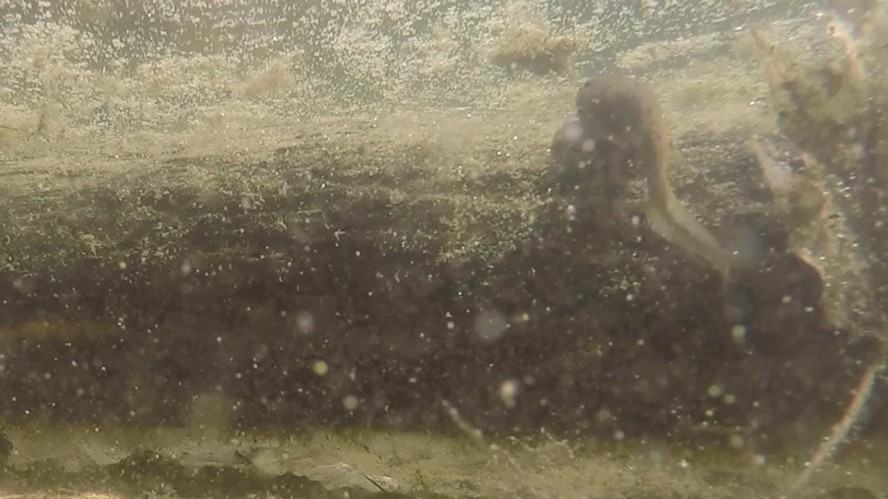 VIDEO: A Theory of Frogs and Toads
