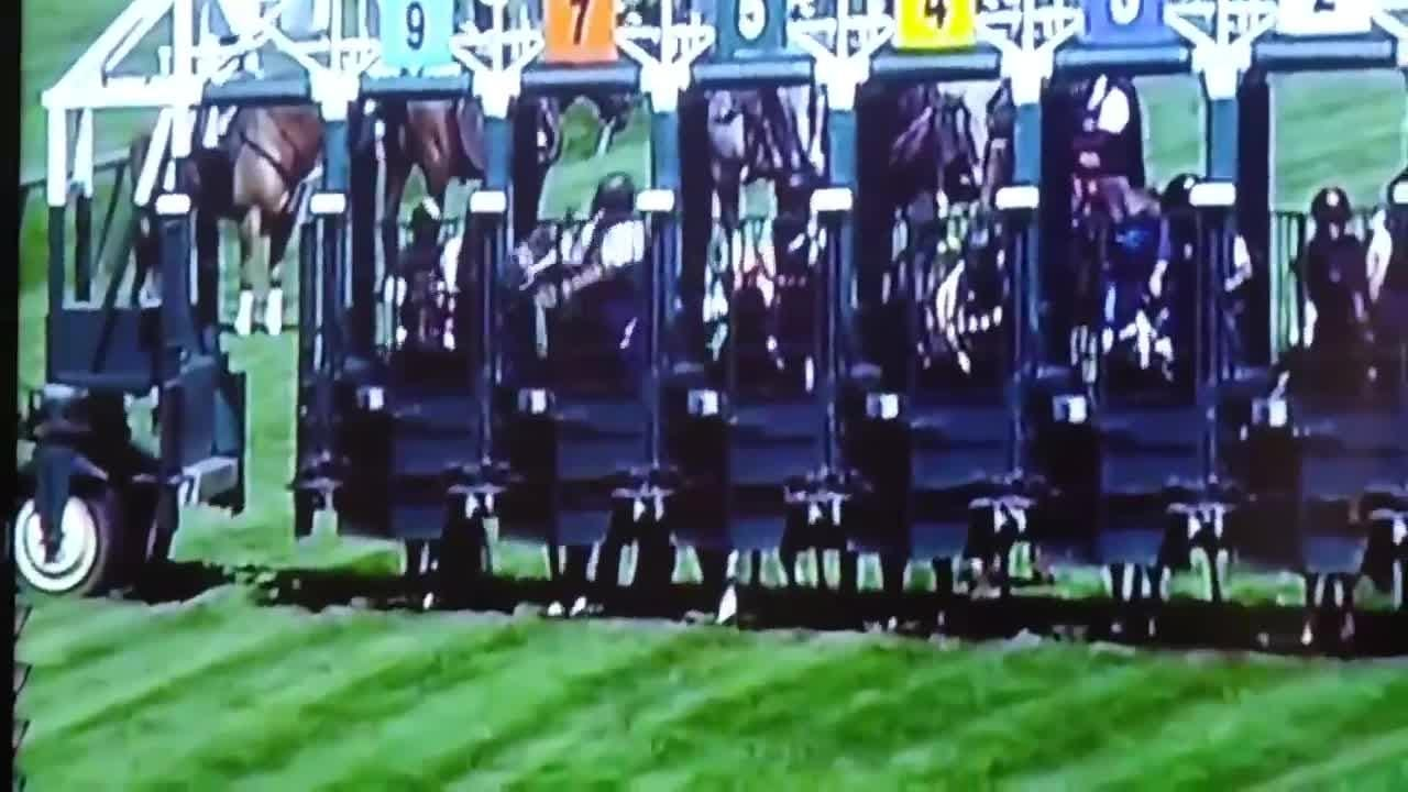 The Delaware Park Racetrack has tweeted that they immediately suspended an assistant starter Thursday, after video of him striking a horse was shared on social media.