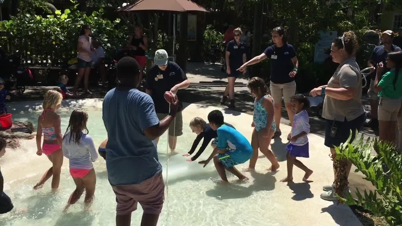 On Tuesdays in June, the Brevard Zoo brings in 1,500 pounds of ice to cool down the pool in the Paws on area.