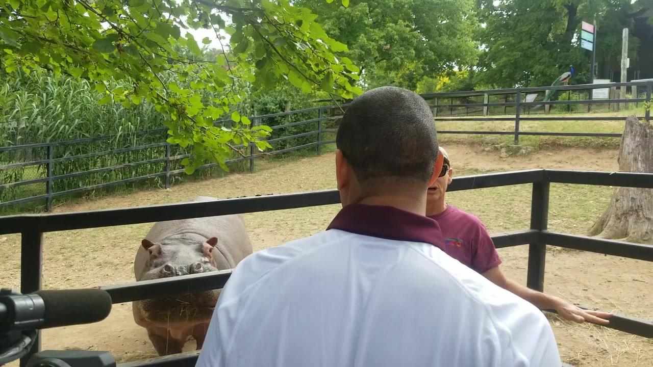 Missouri State head basketball coach Dana Ford and his son Carson shoot hoops into a hippo's mouth at Dickerson Park Zoo.