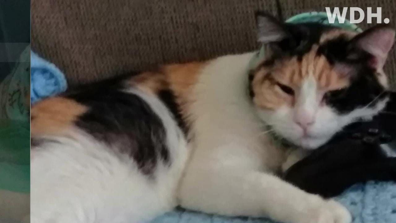 After nearly two weeks in the hospital, Krista Betz is home in recovery with her newly found cat, Lucy.