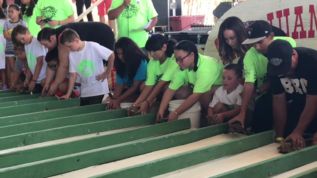 Many gather for the 30th annual turtle races as part of the the San Juan Festival in Tortugas.