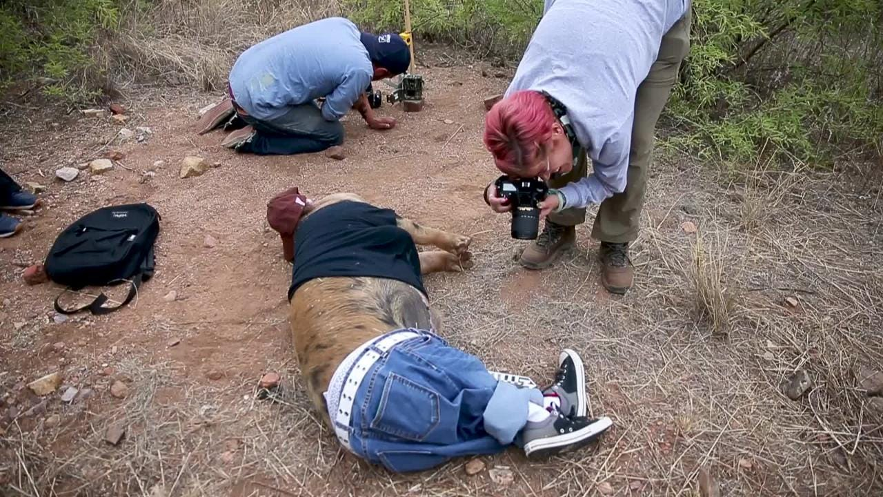 Dead pigs dressed as migrants placed in Arizona desert by researchers