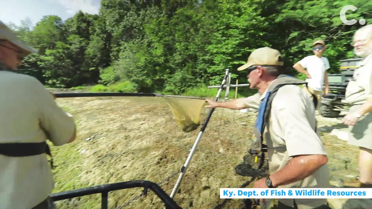 Because of a dam leak,  the lake level at the state park in Boone County is being lowered. Fish were removed and transported to another county.