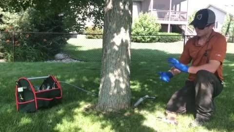 Master arborist shows the steps he takes to save your ash trees