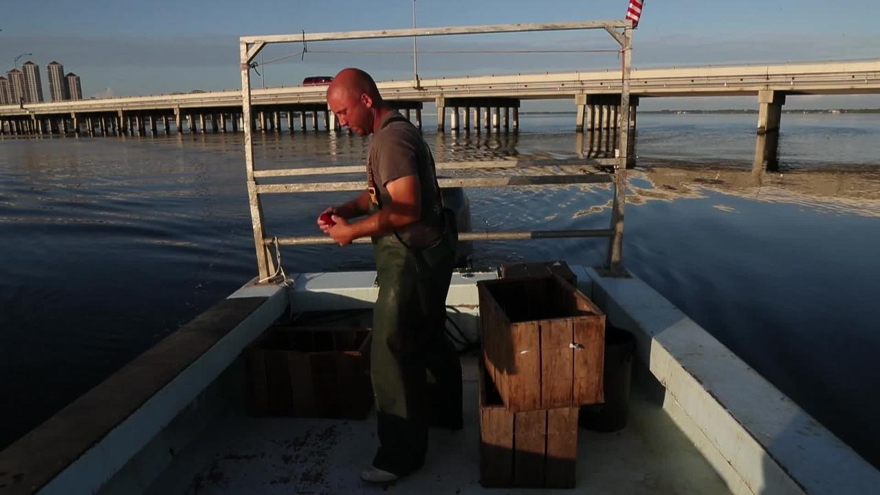 Blue crabber talks about how algae is affecting industry