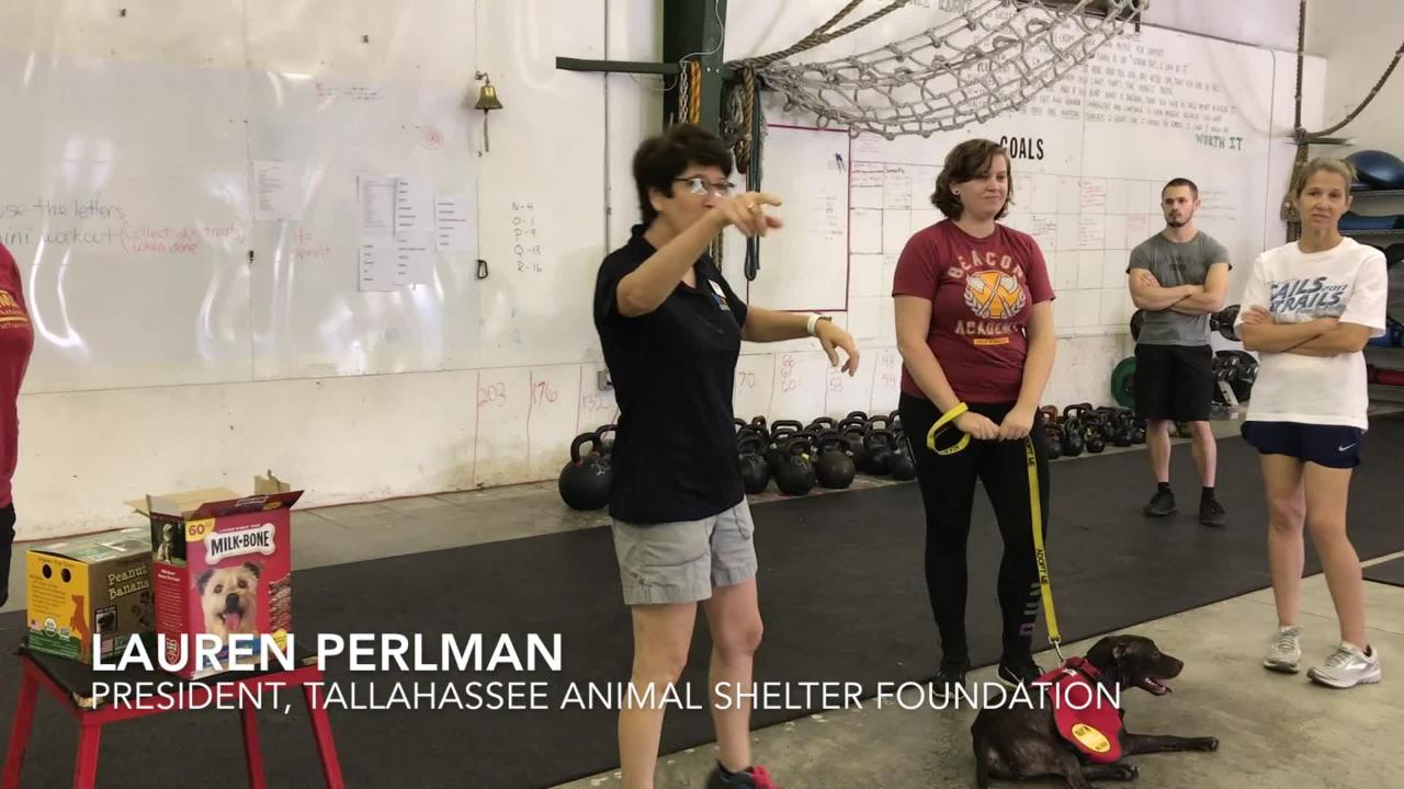 Exercisers raised funds for the Tallahassee Animal Shelter Foundation by working out with adoptable shelter pets.