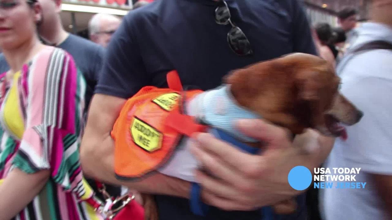 Broadway Barks brings out stars to help homeless pets