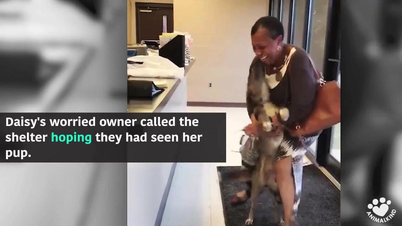 The beautiful moment a lost dog finds her owner: This sweet reunion was two weeks in the making.