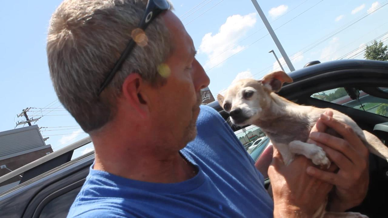 Lola, a Chihuahua with a missing leg, was reunited with her owner after being missing for three years.