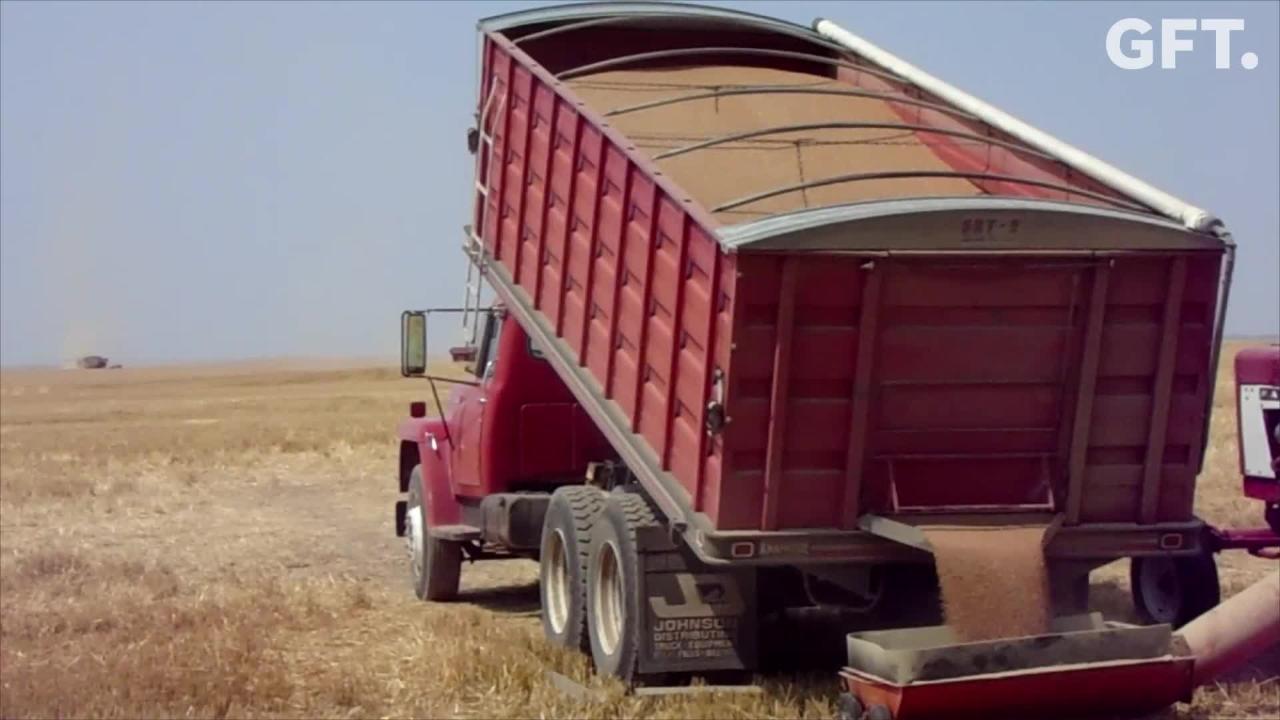 Watch scenes of Montana's winter wheat harvest