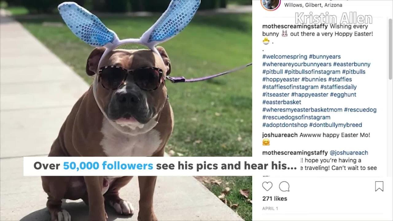 Internet-famous 'screaming' dog Mo is from Arizona