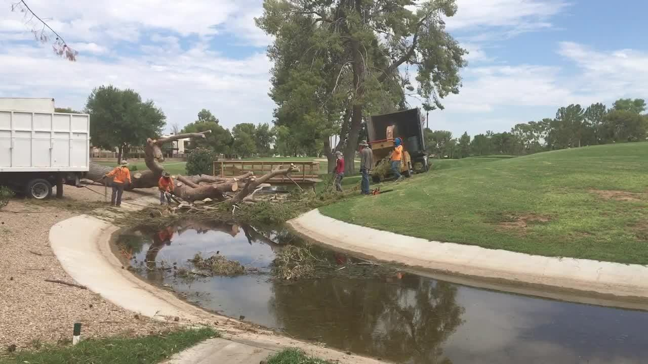 Workers clean up fallen trees at Dobson Ranch Golf Course in Mesa. City officials estimate it will cost $50,000 to clean up the damage from the trees.