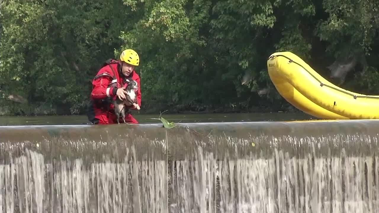 Members of the Christiana Fire Company rescued a small dog that had wandered out to the waterfall in the area of Smalleys Pond.  8/17/11