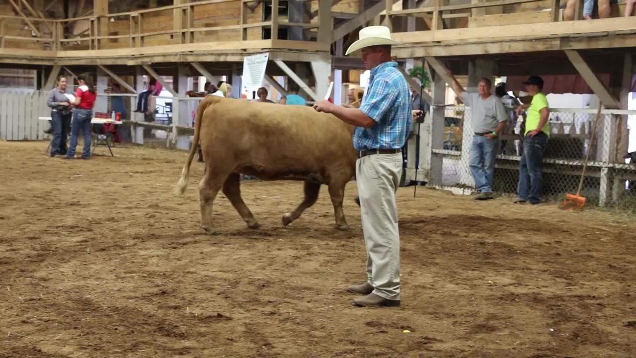 The Showman of Showmen was crowned at the Muskingum County Fair on Friday.