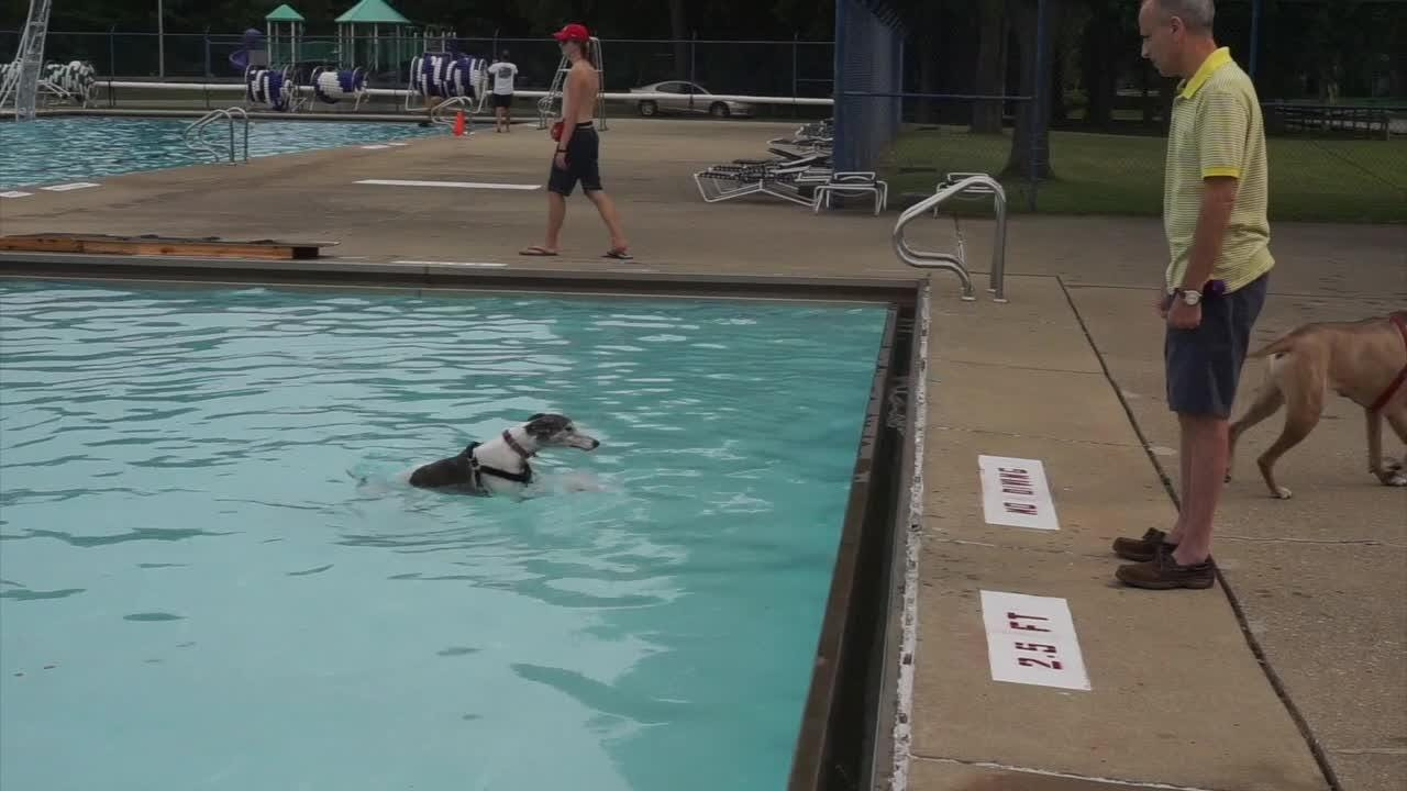 Livonia city pools welcome dogs for final day of swimming season