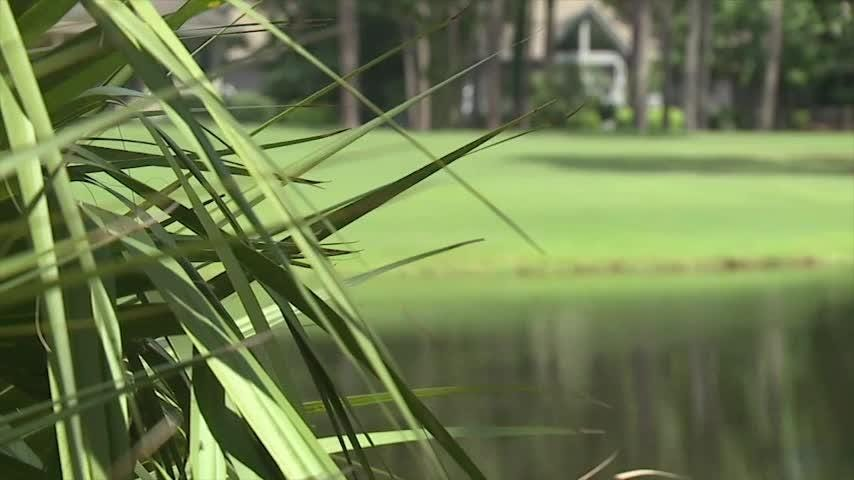 A woman who often walked her dog near a golf course lagoon was killed Monday by an alligator that dragged her into the water on the South Carolina coast. Authorities said 45-year-old Cassandra Cline was trying to protect her dog.  (AP)