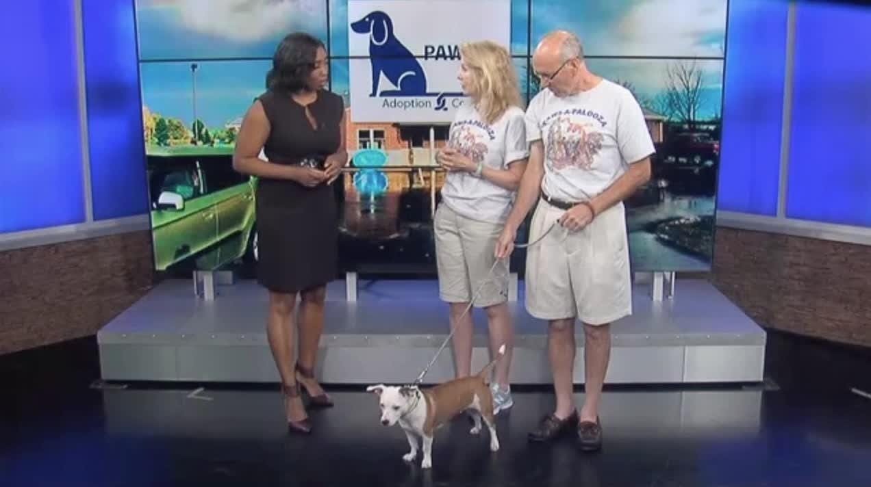 The animal awareness event benefits PAWS Adoption Center - http://www.pawsadoptioncenter.org/home/paws-a-palooza