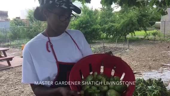 Overnight vandalism destroyed about 90 percent of the crops at a teen garden behind The Neighborhood Center on Kaighn Avenue, Camden.