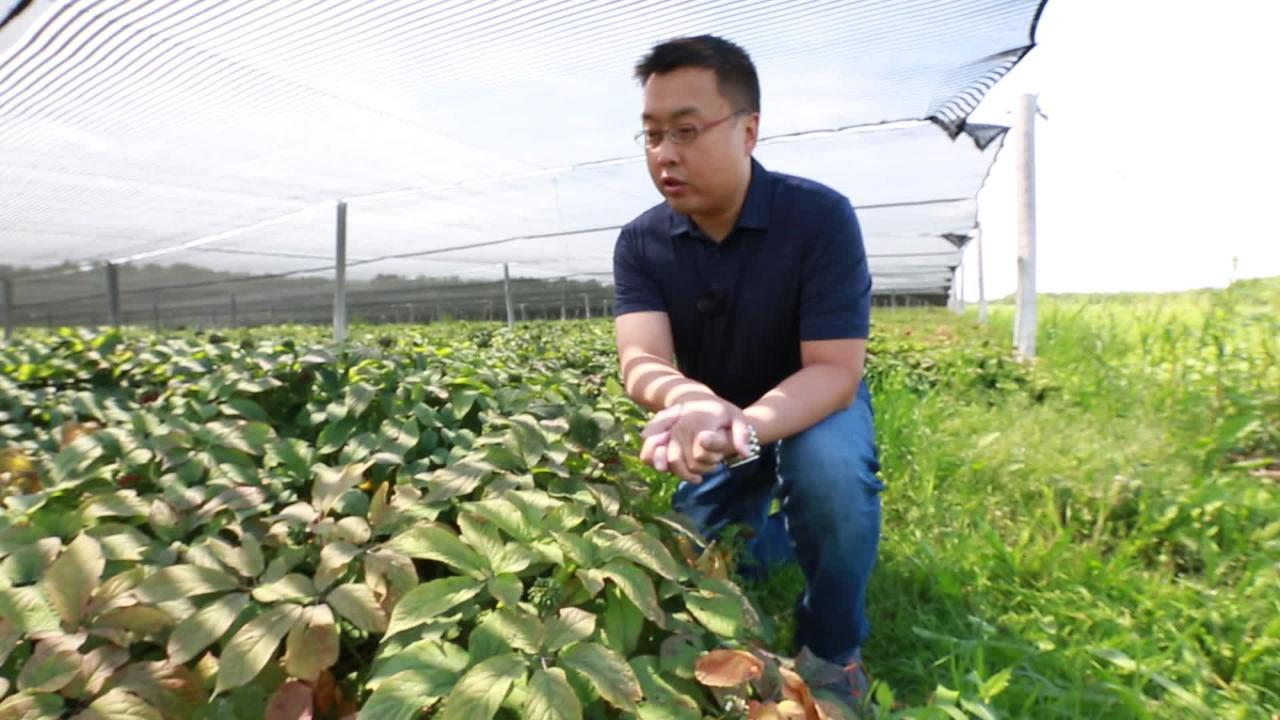 WAUSAU - At Hsu Ginseng, evolution isn't a foreign concept. The company has been pioneering ways to deliver ginseng to consumers both foreign and domestic since the 1970s. Ginseng is said to improve overall health and well-being, though scientific study of the root's effects have been inconclusive.