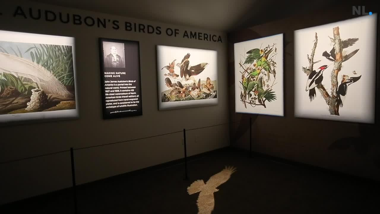 Wonders of Wildlife unveiled its newest exhibit, The Year of the Bird, which features prints of Audubon's original bird paintings, interactive displays that let visitors learn about migration routes and bird species and some relics from commercial hunting's past.