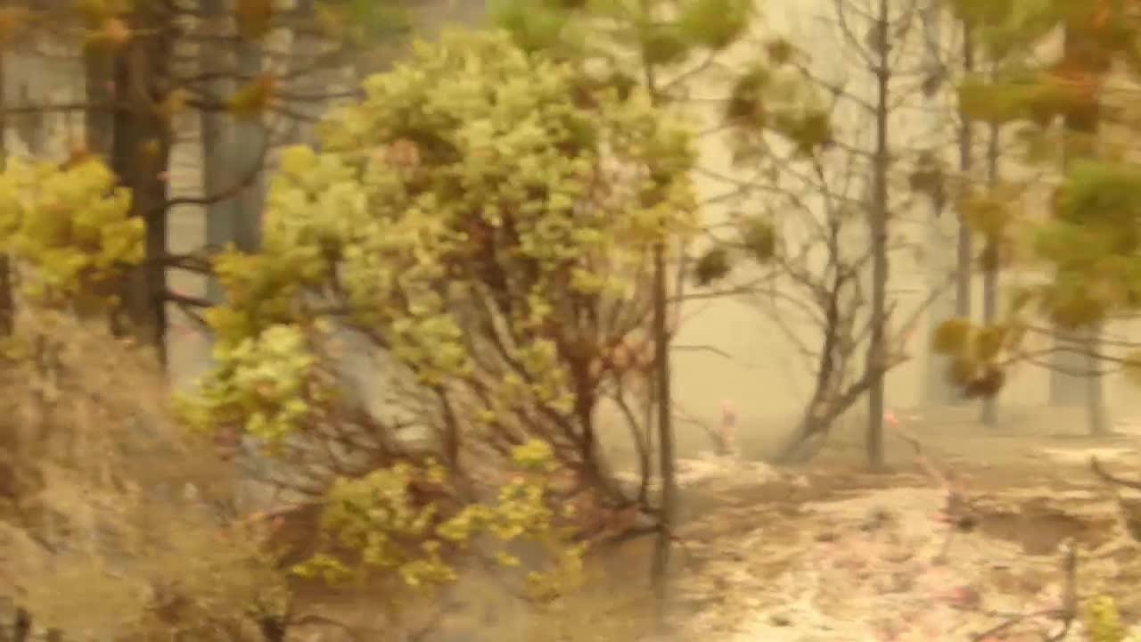 A frightened deer seeks safety Friday as firefighters continued to battle the Delta Fire north of Lakehead.