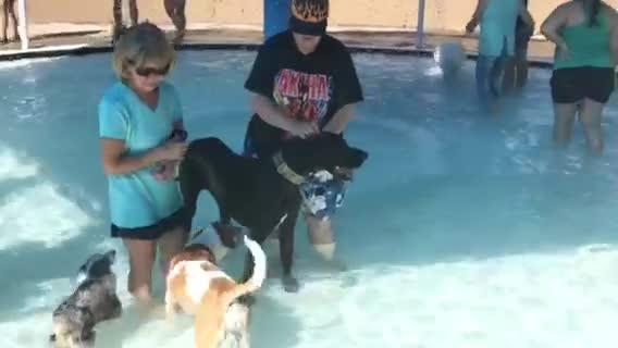 'Dog Day' swim event Sunday at Nations Tobin Aquatic Center