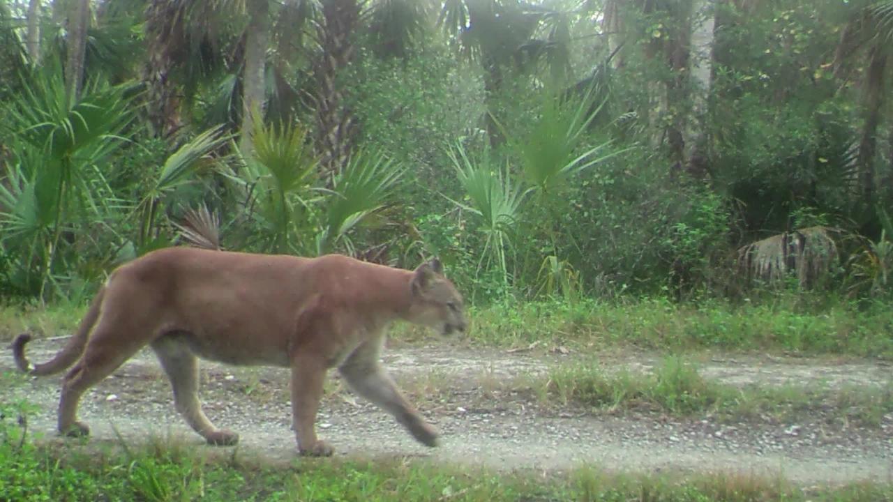 Corkscrew Regional Ecosystem volunteer educates with trail cameras