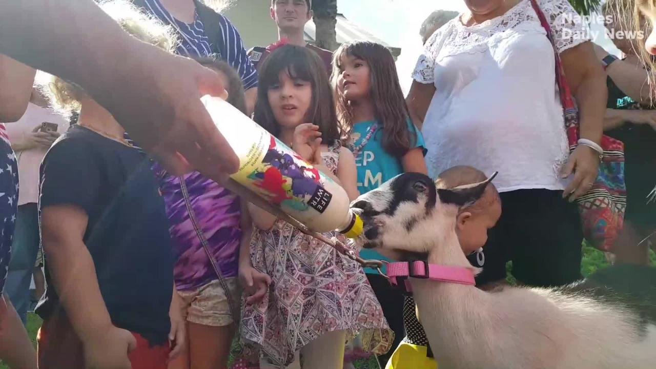The Estates Branch Library hosted farm animals, including goats and chickens, and gave the kids an opportunity to ask questions and interact with them.