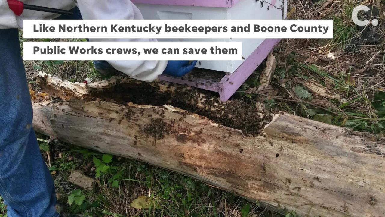 Save the bees: How you can help