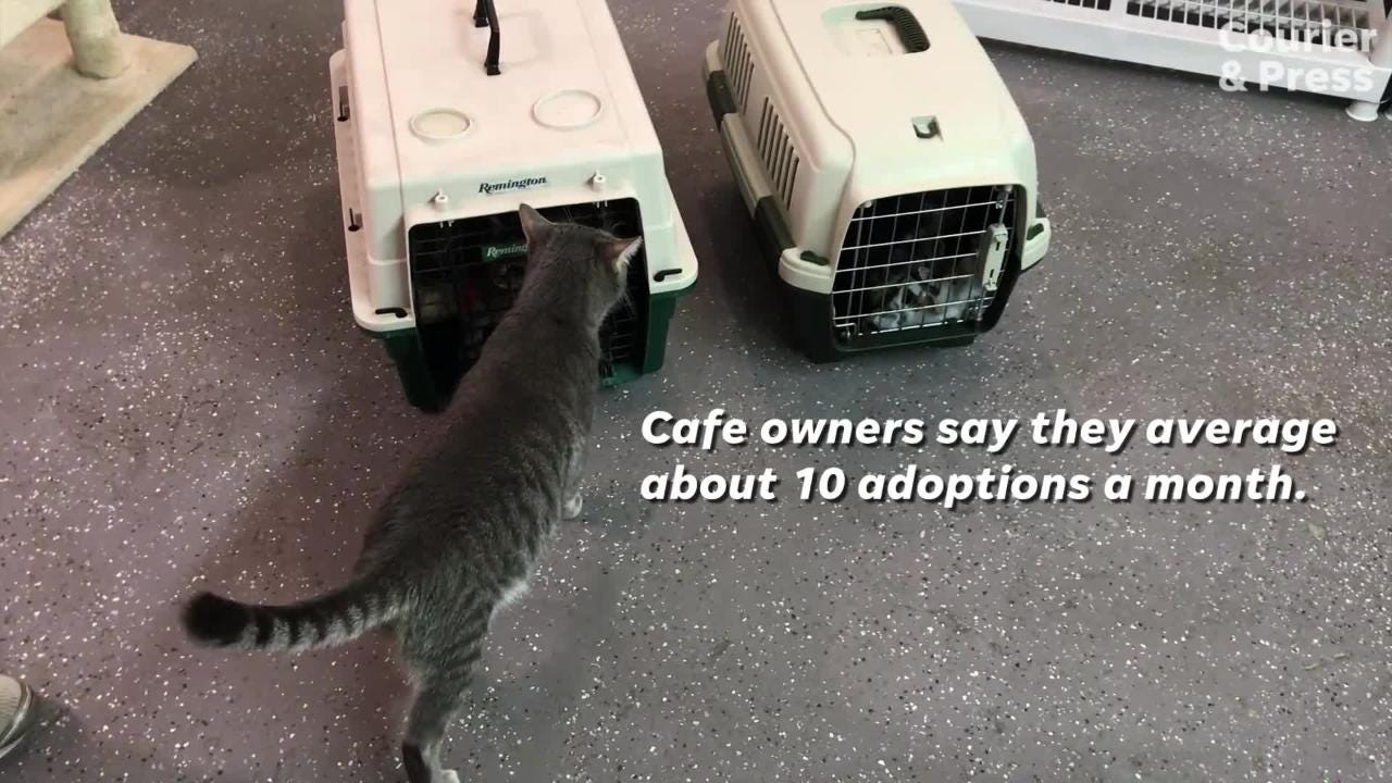 River Kitty Cat Cafe has been averaging about 10 adoptions a month. The cafe partners with the Vanderbugh Humane Society.