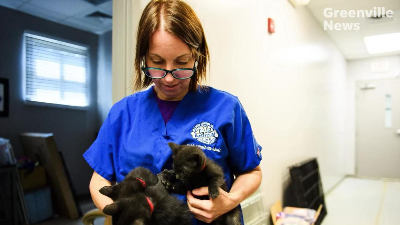 Greenville Animal Care employees and volunteers help animals rescued from Hurricane Florence